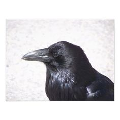 Crow Photo Print - animal gift ideas animals and pets diy customize