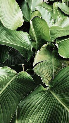 Green Leaves Clean Air – Best Garden Plants And Planting Wallpaper Bali, Garden Wallpaper, Plant Wallpaper, Landscape Wallpaper, Leaves Wallpaper Iphone, Wallpaper Ideas, Pattern Wallpaper, Green Nature Wallpaper, Tropical Wallpaper