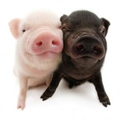 Artlist Collection THE PIG — pink and black