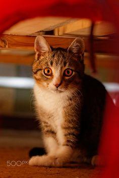 Rescued Kitty by Paweł Kijak on 500px