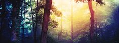 Click to get this forest light facebook cover photo