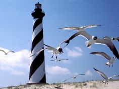 gulls at the light house