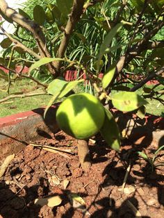 Tips That Will Support You With Organic Gardening -- Check out this great article. Landscaping Tips, Outdoor Landscaping, Organic Gardening Tips, What You Can Do, Image Link, Canning, Landscape, Vegetables, Check