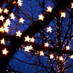 Wish upon a star....would love to do this to the trees in my yard.