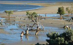 Mangrove près de Tuléar : nature en bordure de mer - MADAGASCAR