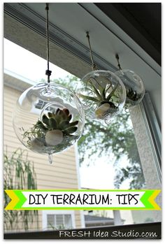 DIY Terrarium Tips and Tricks. CON UNA CRUZ DE PALOS COMO TAPA COLGADOR