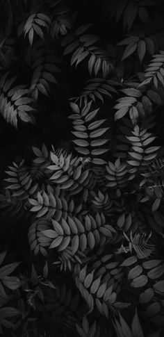 Black Wallpaper iPhone : Black and white wallpaper leaves Ed Wallpaper, Wallpaper Telephone, Black Phone Wallpaper, Trendy Wallpaper, Tumblr Wallpaper, Flower Wallpaper, Wallpaper Backgrounds, Iphone Wallpapers, Leaves Wallpaper