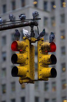 Ideas Street Art Black And White City Life Black And White City, Black And White Pictures, Urban Photography, Street Photography, Photography Lighting, Photo Hacks, Foto Transfer, Traffic Light, Mellow Yellow