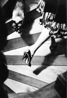 soyouthinkyoucansee:  Soyouthinkyoucansee Cats, circa 1950's Photographer- Frances Pellegrini