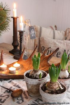 lovely calm setting with hyacinth bulb pots.. love the antler wooden bowl