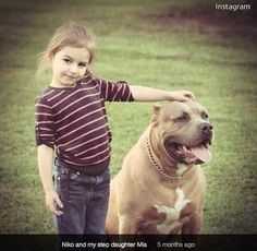 Photo of 4 year old Mia DeRouen with the 130 pound pit bull that later killed her.  Both the dam and the sire of this massive pit bull were UKC registered American Pit Bull Terriers.