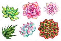 Watercolor succulent hand drawn set Graphics Watercolor succulent cactus flower plant hand drawn set isolated---**Keywords:**art, watercolor by Art By Silmairel Succulents Drawing, Watercolor Succulents, Watercolor Cactus, Cacti And Succulents, Watercolor Paintings, Cactus Blossoms, Cactus Flower, Kaktus Illustration, Flor Tattoo