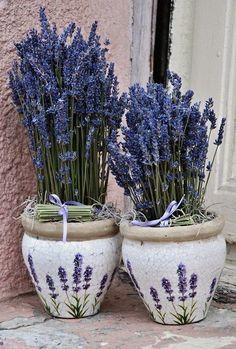 Lavender in Provence Lavender Cottage, Lavender Green, French Lavender, Lavender Fields, Lavender Flowers, Purple Flowers, Beautiful Flowers, Color Lavanda, Lavender Crafts