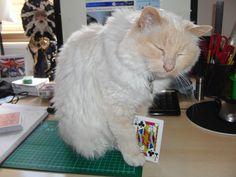 Razamatazz's Cat Louie doing a card trick ! Card Tricks, Entertaining, Cats, Animals, Gatos, Animales, Animaux, Animal, Cat