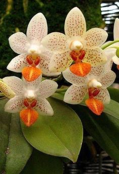Exotic flowers – Home Decor Gardening Flowers Strange Flowers, Unusual Flowers, Rare Flowers, Orchids Garden, Orchid Plants, Orchid Flowers, Indoor Orchids, White Orchids, Flowers Garden