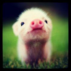 Mini Babe ! #animals