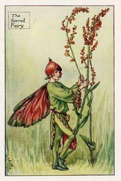 Zuring Flower Fairy Vintage Print, c.1927 Cicely Mary Barker-boekillustratie plaat