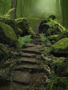 Earth Pictures ‏ Sherwood Forest is a Royal Forest in Nottinghamshire, England Beautiful World, Beautiful Places, Beautiful Forest, Beautiful Stairs, Peaceful Places, Beautiful Beautiful, Sherwood Forest, All Nature, Green Nature