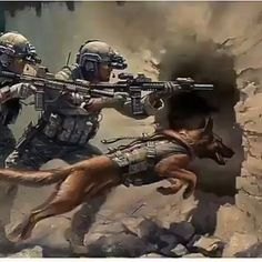 The Ranger Regiment by Stuart Brown showing a Ranger Fire Team and a Military Working Dog assaulting through the breach during a raid. Military Working Dogs, Military Dogs, Police Dogs, Military Art, Military Drawings, War Dogs, Belgian Malinois, Modern Warfare, Service Dogs