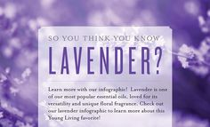 The swiss army knife of oils  www.yldist.com/gypsiesoil/ All About Lavender | Young Living Blog Young Living Lavender, Young Living Oils, Young Living Essential Oils, Essential Oils 101, Therapeutic Grade Essential Oils, Oils For Relaxation, Yl Oils, Lavender Oil, Fragrance