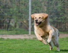 ¿Por qué mi perro se escapa?