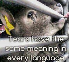 Go vegan for the animals. please :(