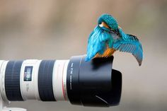 too close for a good shot :-)