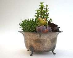 Great idea for planting and elegantly displaying succulents!