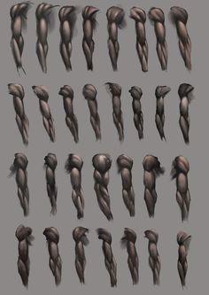 Anatomia - Braço