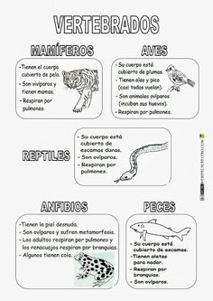 Vertebrados Science Classroom, Teaching Science, Science For Kids, Science Activities, Science Projects, Life Science, Science And Nature, Animal Classification, Experiment