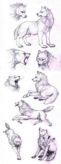 How to draw a wolf - different poses: howling, lying, standing - Animal drawing…