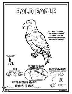 Bald Eagle - 15 Zoo Wild Resources - Leveled Reading, Slides & Activities A Bald Eagle from the tree tops of North America.Do you have zoo wild kids?Infuse wild animal learning with geography, biology and wildlife conservation designed for kids with a Zoo Camping Activities For Kids, Color Activities, Classroom Activities, Eagle Facts, National Symbols, North America, Central America, American Symbols, Reading Passages