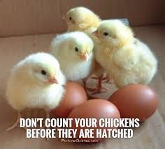 Image Result For Chicken Quotes Baby Chickens Chickens Baby Chicks
