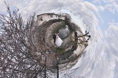 視覺效果 樹 老房子