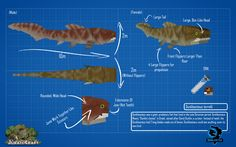 JurassiCraft BluePrint // Dunkleosteus by JurassiCraft on DeviantArt Jurassic Craft, Be The Creature, Minecraft Party, Minecraft Ideas, Indominus Rex, Meant To Be Together, Prehistoric Creatures, Dinosaurs, Crafts
