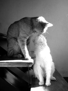 so sweet kitty kisses. I Love Cats, Crazy Cats, Cute Cats, Funny Cats, Funny Animals, Cute Animals, Animals Kissing, Baby Animals, Beautiful Cats