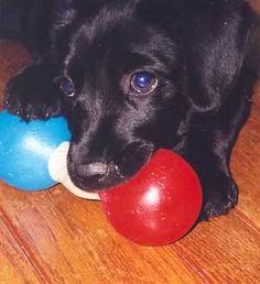 Heidi, when she was a puppy