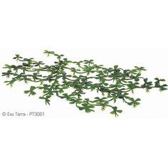 Plantas Foltantes  EXOTERRA 15 cm Estas plantas son un excelente complemento para los recipientes de agua, o para la parte acuática de un terrario natural