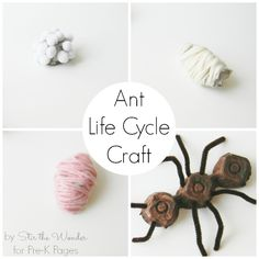Insect Science: Ant Life Cycle Craft