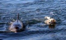 best Labrador stikers for Golden Retrievers, Unusual Animals, Cute Animals, Yellow Lab Names, Unlikely Friends, Best Friend Tattoos, Dog Runs, Mundo Animal, Dog Life