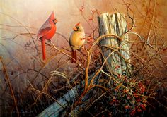 Frankly Scarlet by Scott Zoellick Painting Print Plaque Wildlife Paintings, Nature Paintings, Wildlife Art, Animal Paintings, Art Paintings, Original Paintings, Painting Prints, Wall Art Prints, Bird Prints