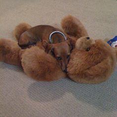 I love my teddy!