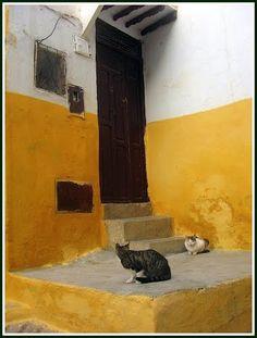 Gatos de Tetuán, Marruecos (Maroc, Morocco), Carlos Cuerda