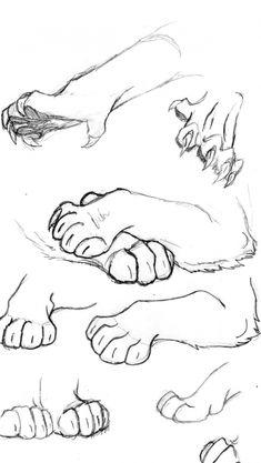 Animal Sketches, Art Drawings Sketches, Animal Drawings, Cool Drawings, Drawing Animals, Realistic Drawings, Drawings Of Animals, Pencil Drawings, Dragon Drawings