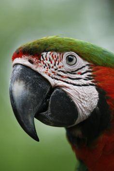 Polly by seblyngra on 500px