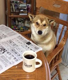 """Dog reading a newspaper. """"Can I get some milk for my coffee, please...?"""""""
