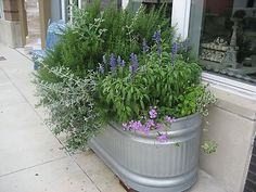 rosemary, Mexican sage, basil, purple verbena in a water trough.so lovely! Then put on wheels so it can be rolled to where you need it to be Galvanized Water Trough, Galvanized Planters, Trough Planters, Galvanized Metal, Metal Water Trough, Big Planters, Water Tub, Herb Planters, Planter Ideas