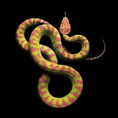 Amazing Photographs Of Snakes With Gorgeous Graphic Patterns On Their Skin