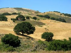 California oaks on golden hills Alta California, Central California, California Homes, Northern California, San Joaquin Valley, Golden Hill, Central Valley, Natural Wonders, Landscape Photos