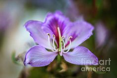 Cadiz Spain, Orchids, Plants, Art, Lilies, Flora, Kunst, Plant, Orchid